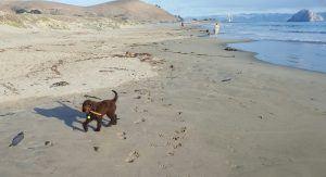 Louie - Beach
