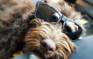 Louie - Glasses